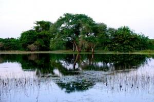 parque-nacional-orango-1